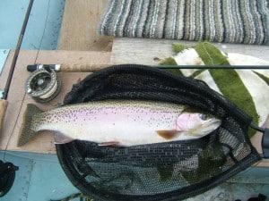 fly rod reel fish