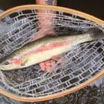 A Weekend of Fishing the Skagit River